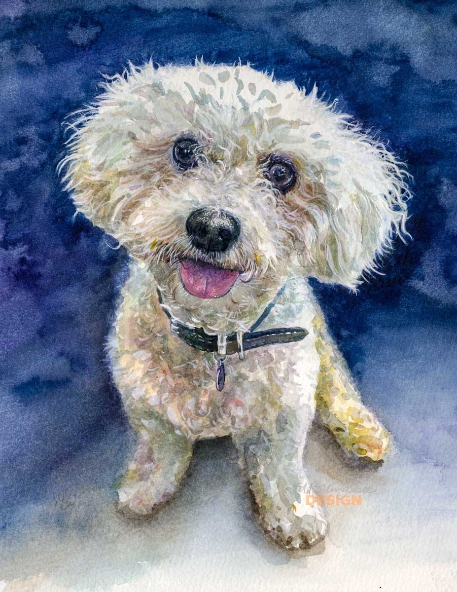 Teddy-the-Bichon-Frise-low-res.jpg