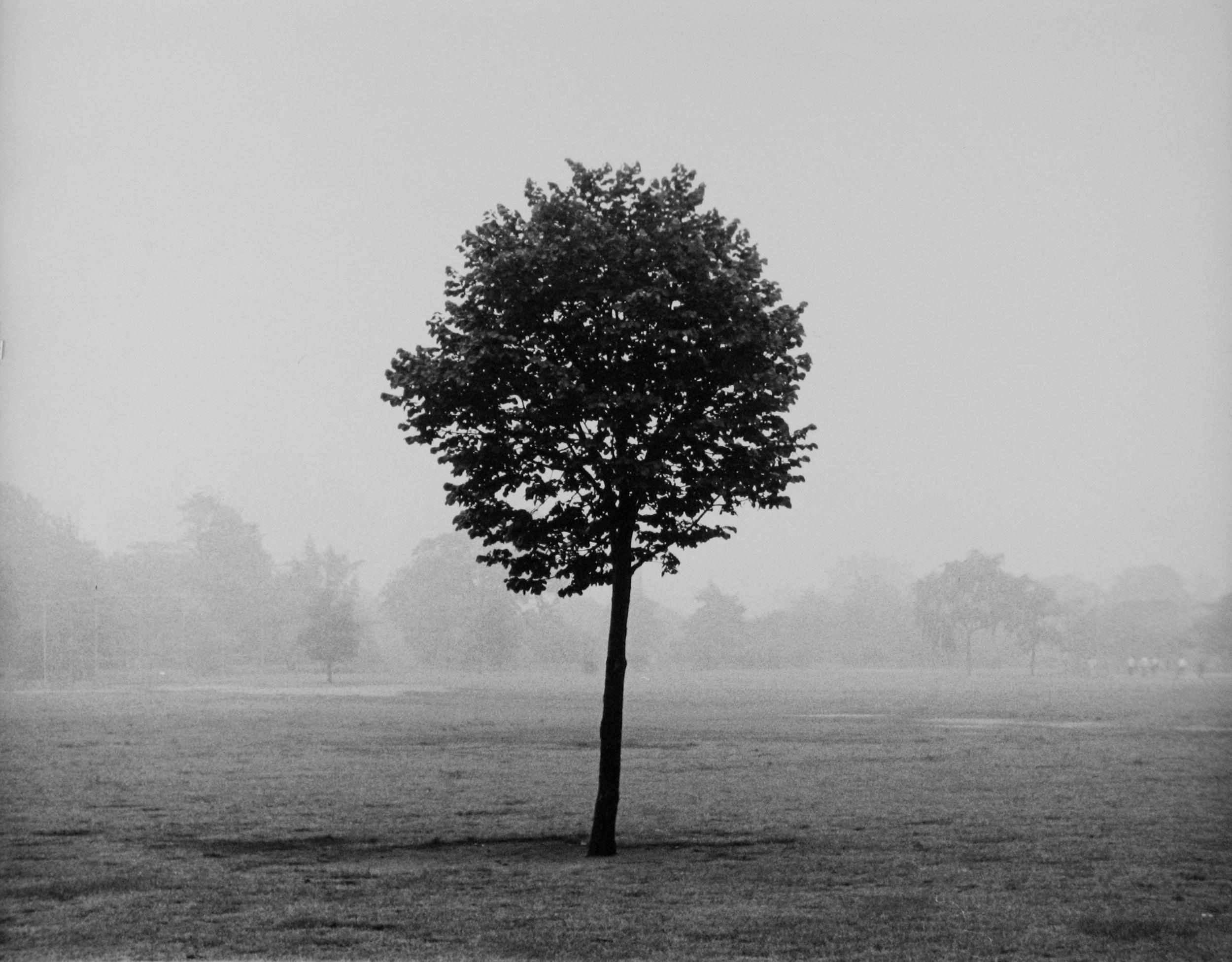 lolipop-tree.jpg