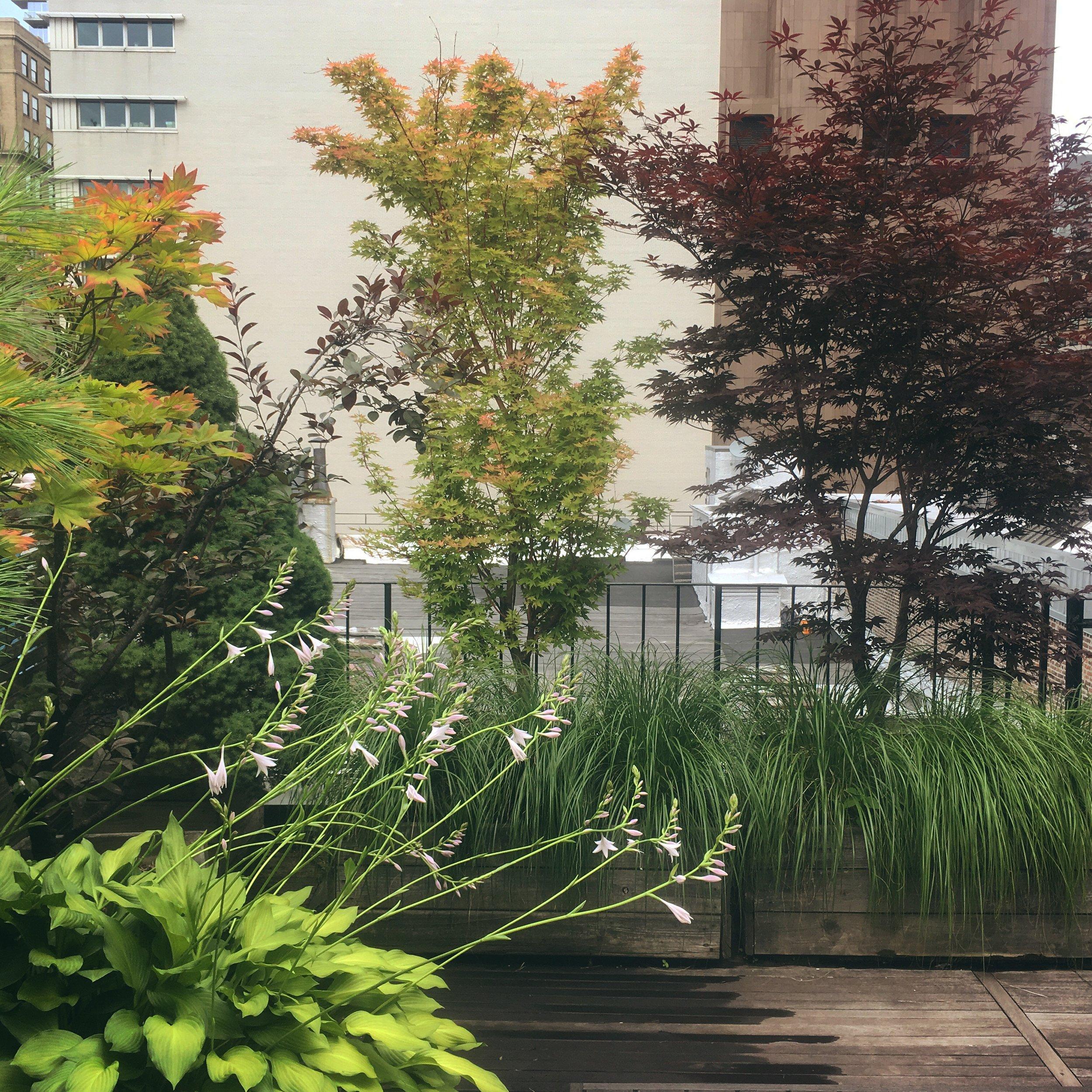 Tori Sparks_Heatherton_urban garden2.JPG