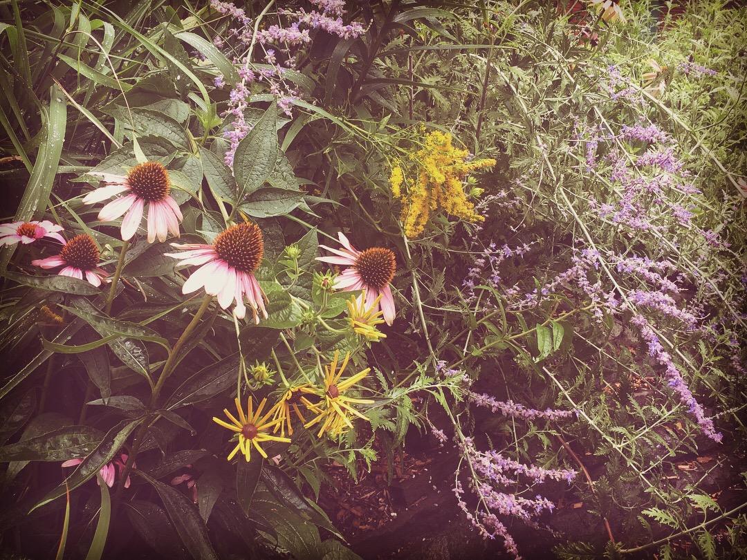 Tori Sparks_Heatherton_urban garden5.JPG