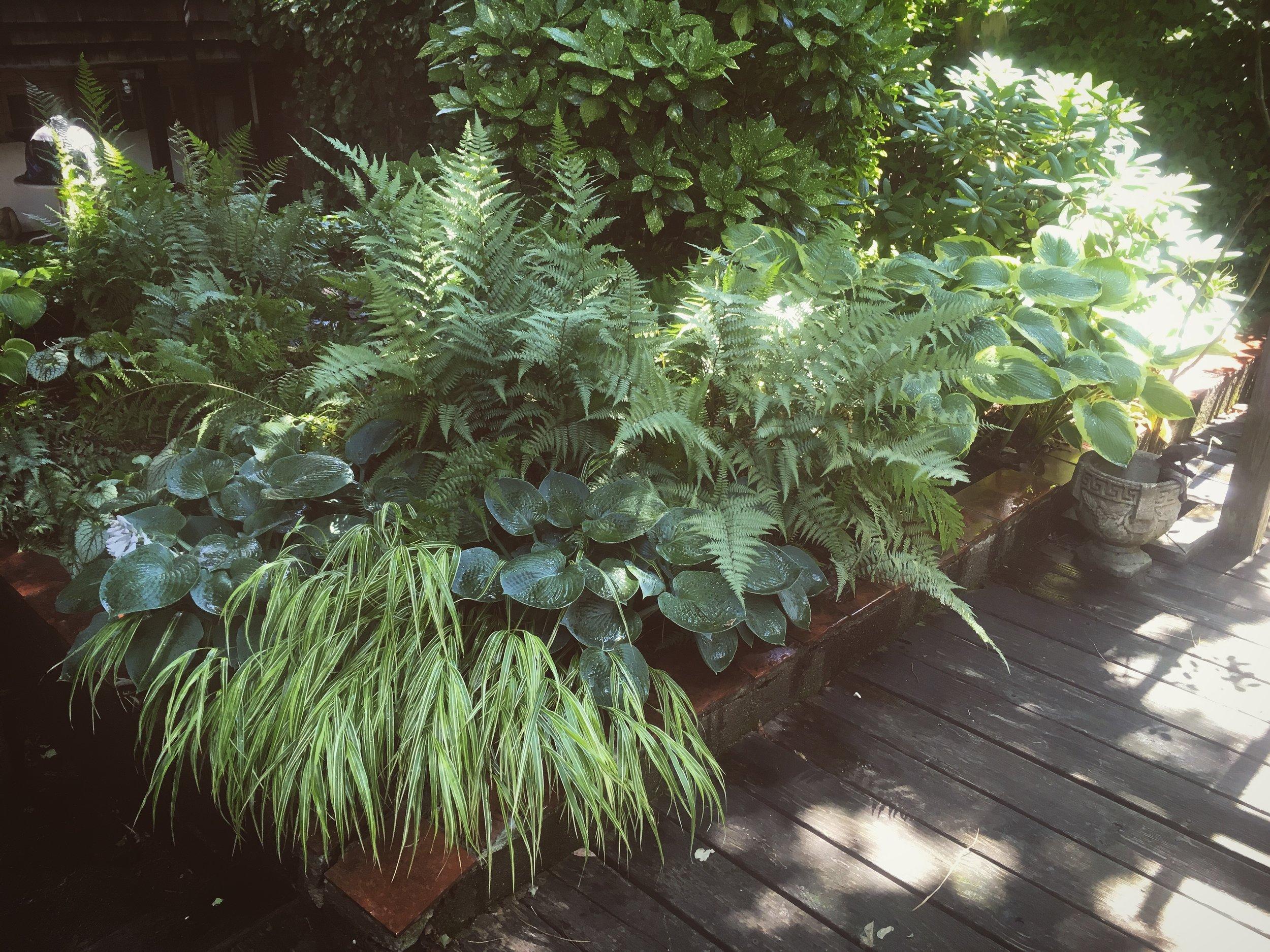Tori Sparks_Heatherton_urban garden4.JPG