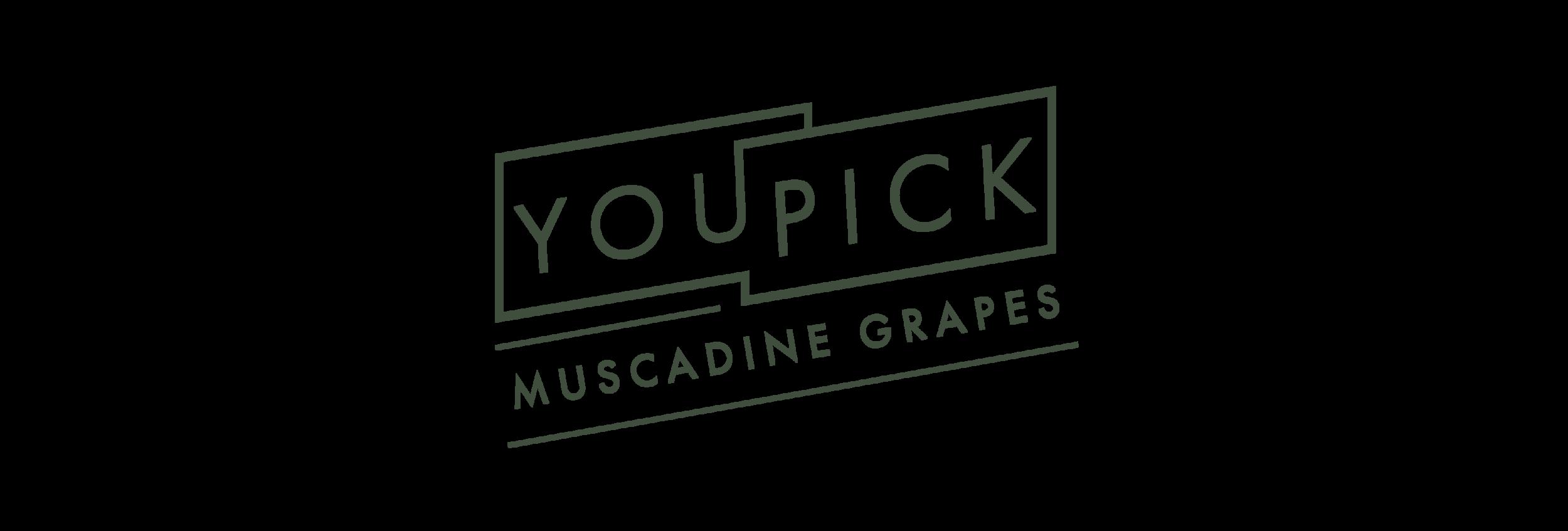 YouPick-03.png