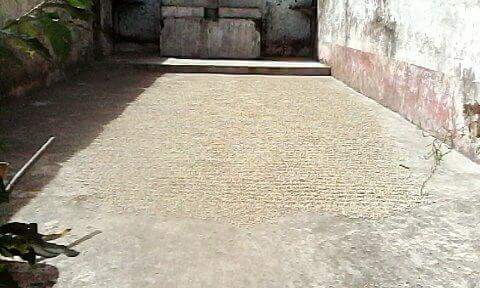 Coffee drying on what used to be the chapel floor at El Carmen.