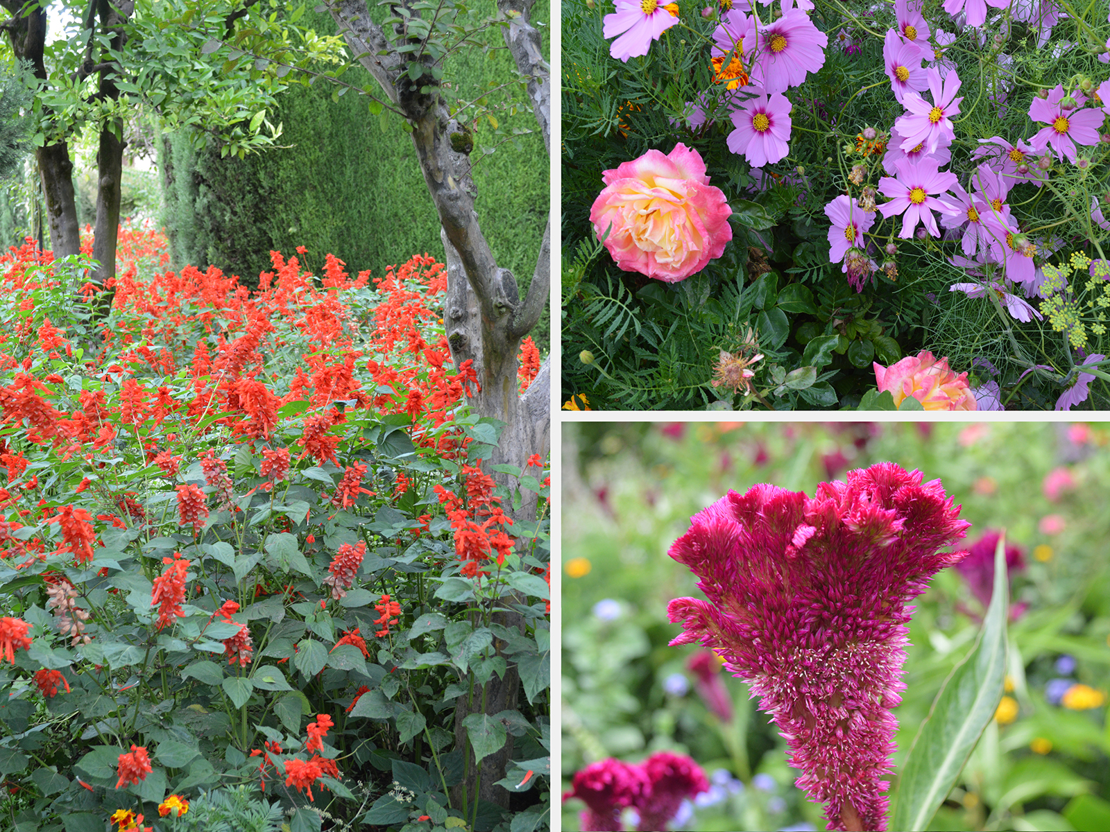 Plants and flowers of the Generalife gardens