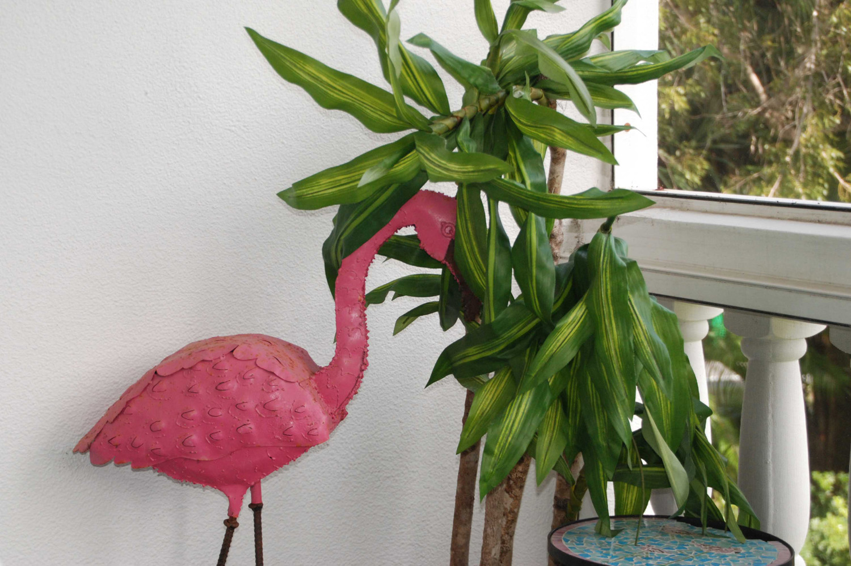Flamingo_crop_01-17-2014_web_DSC_0046_1500_edited-3.jpg