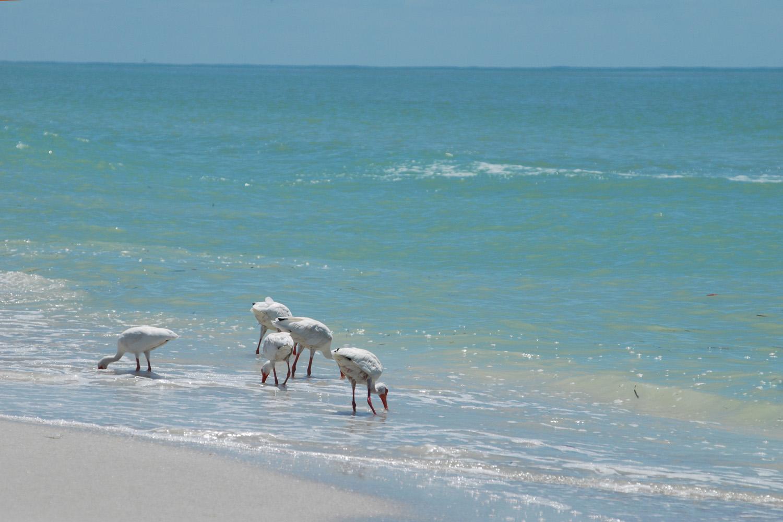 Private_Gulf_Beach-1_1500_web_edited-1.jpg