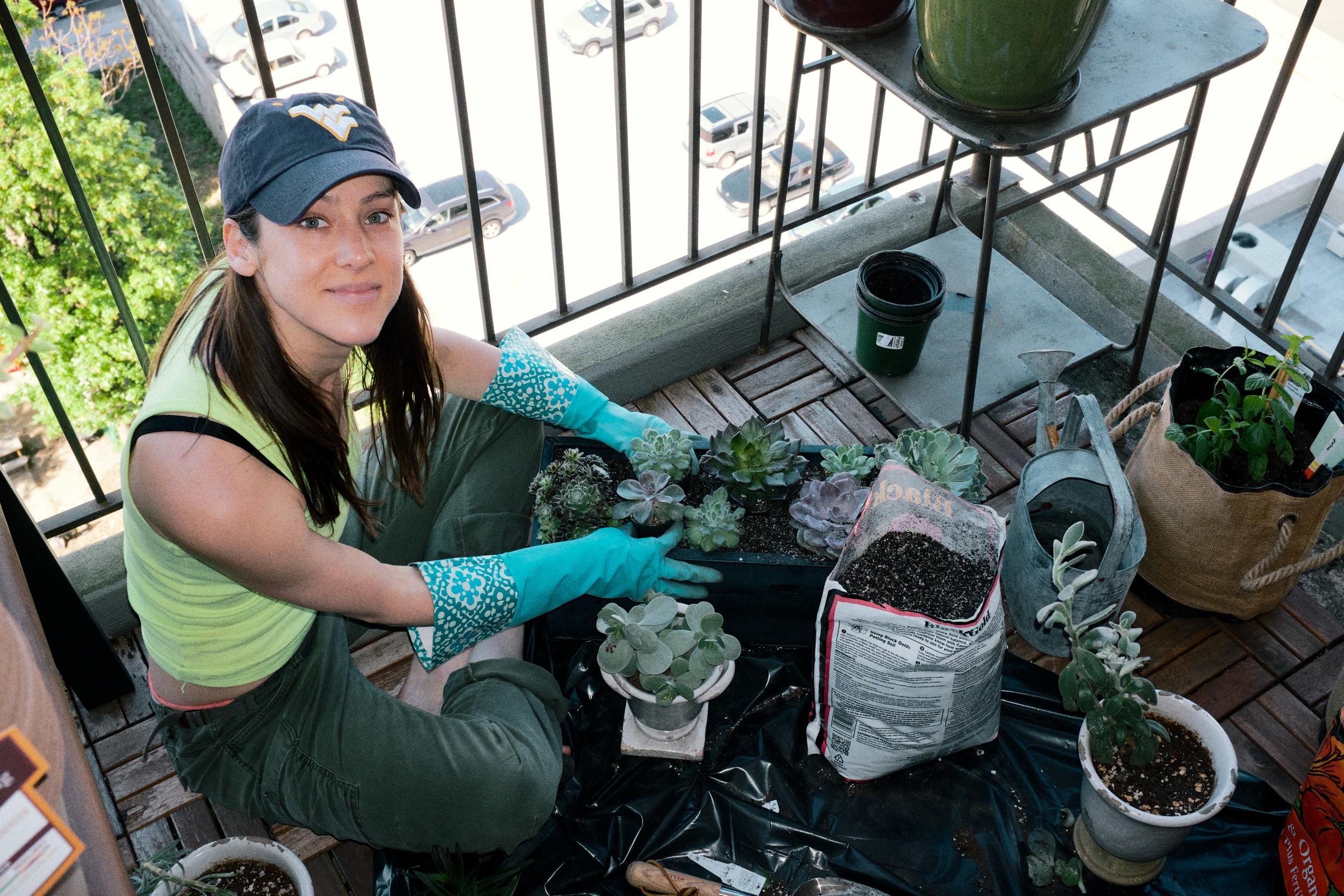 Creating a succulent garden