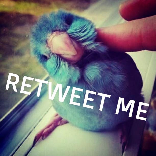 reallifetwitterbird.jpg