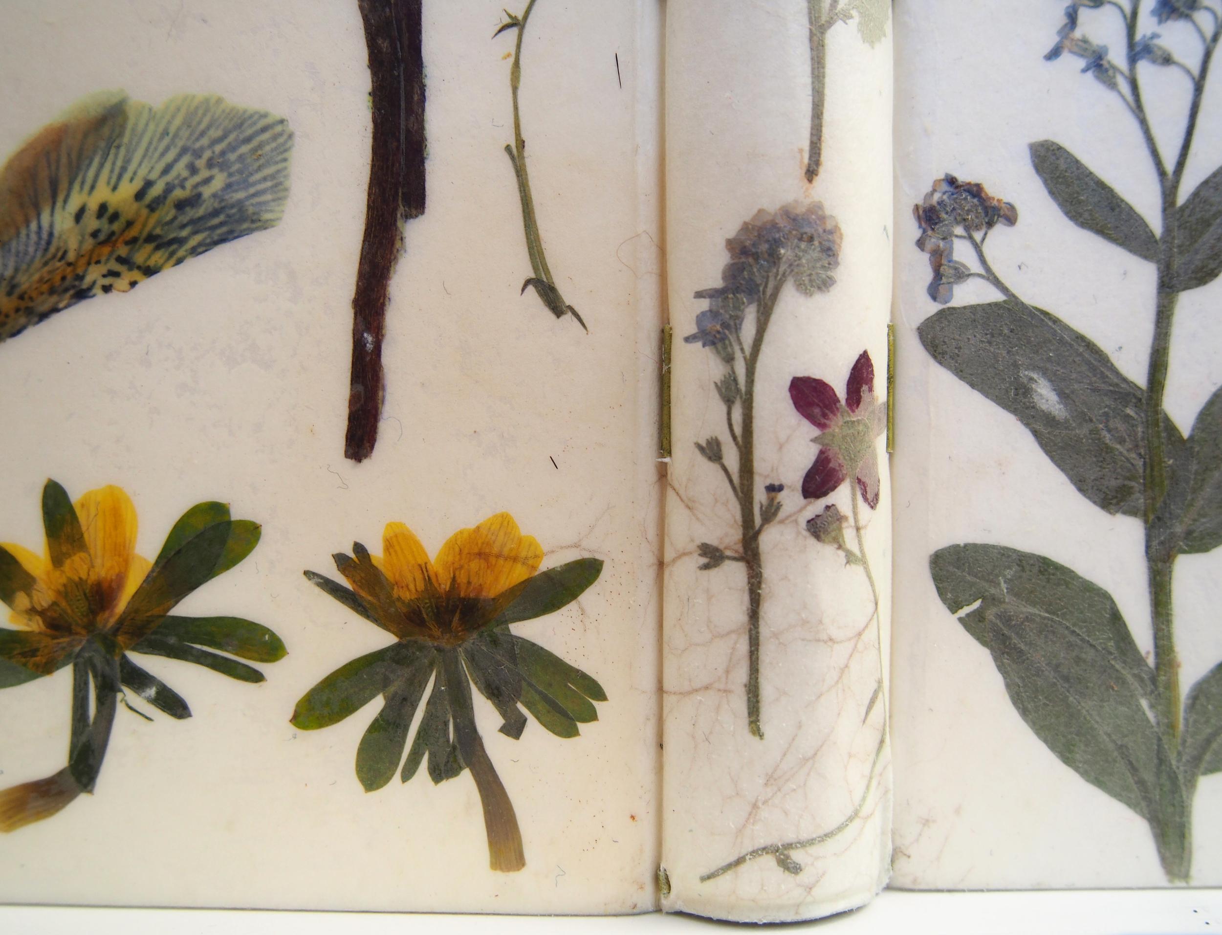 Herbarium 18.jpg