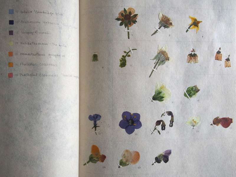 Herbarium 22.jpg