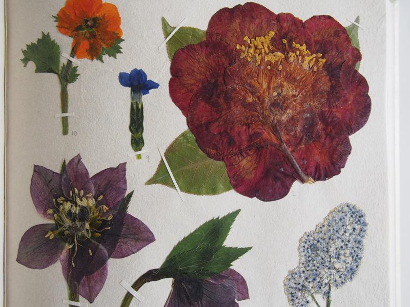 Herbarium 24.jpg