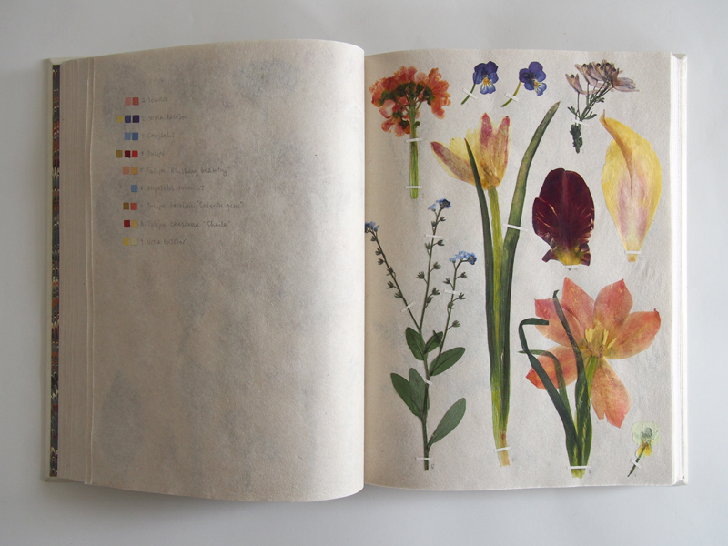 Herbarium 28.jpg