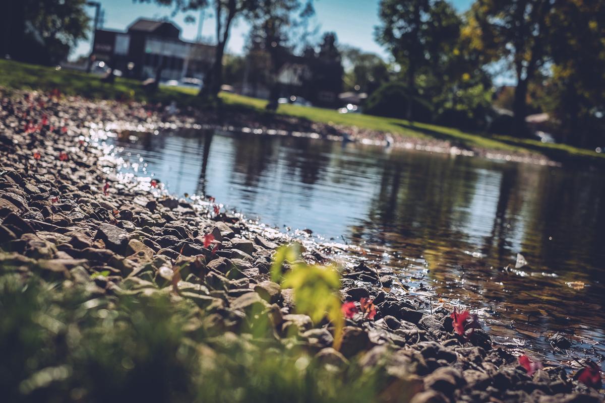 friendship_gardens_10011525.jpg