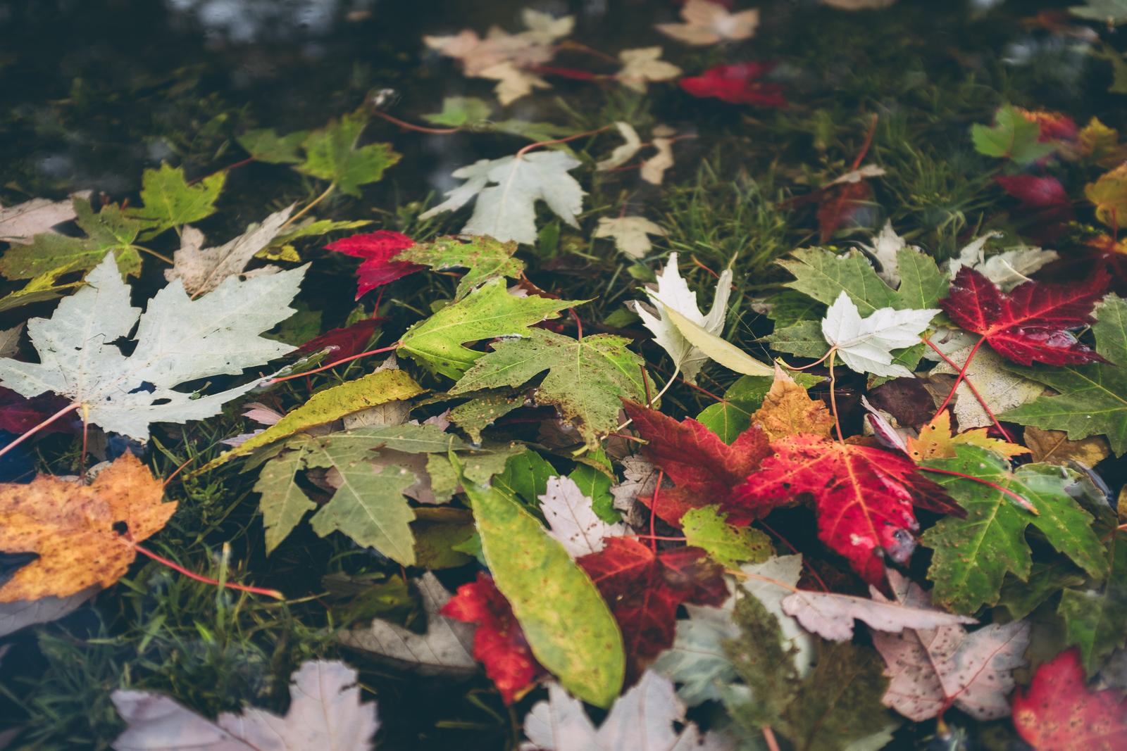 thanksgiving-2018-blog-24.jpg