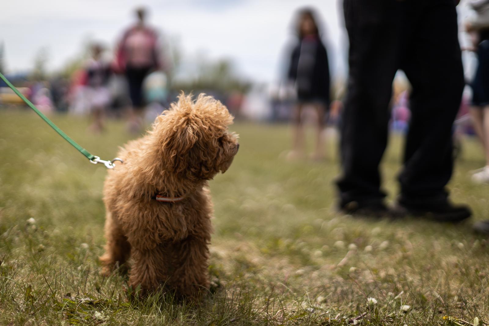 kite-festival-2019-blog-5.jpg