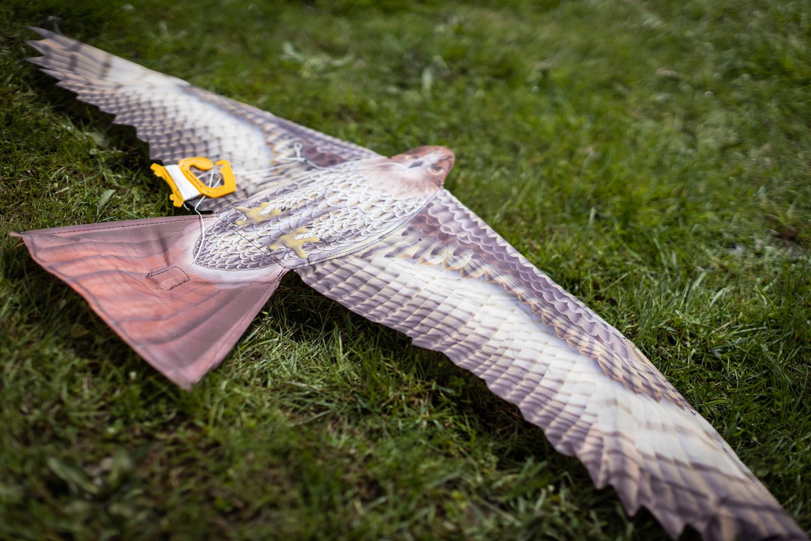 kite-festival-2019-blog-32.jpg