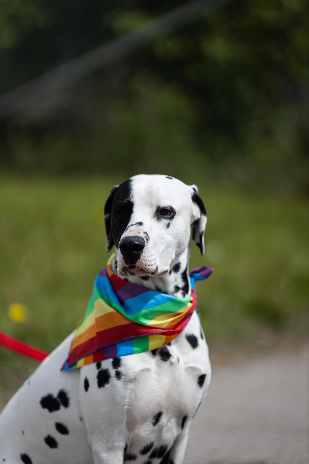 pride-parade-2019-fb-7.jpg