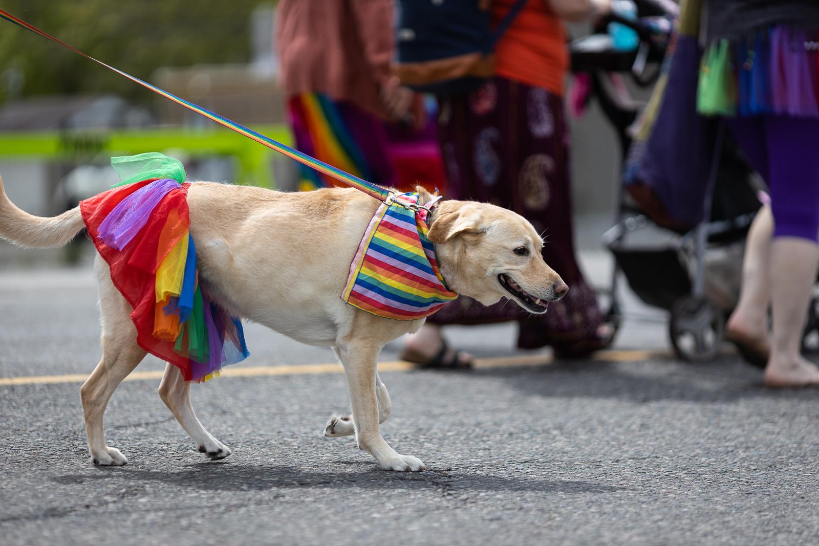 pride-parade-2019-fb-42.jpg