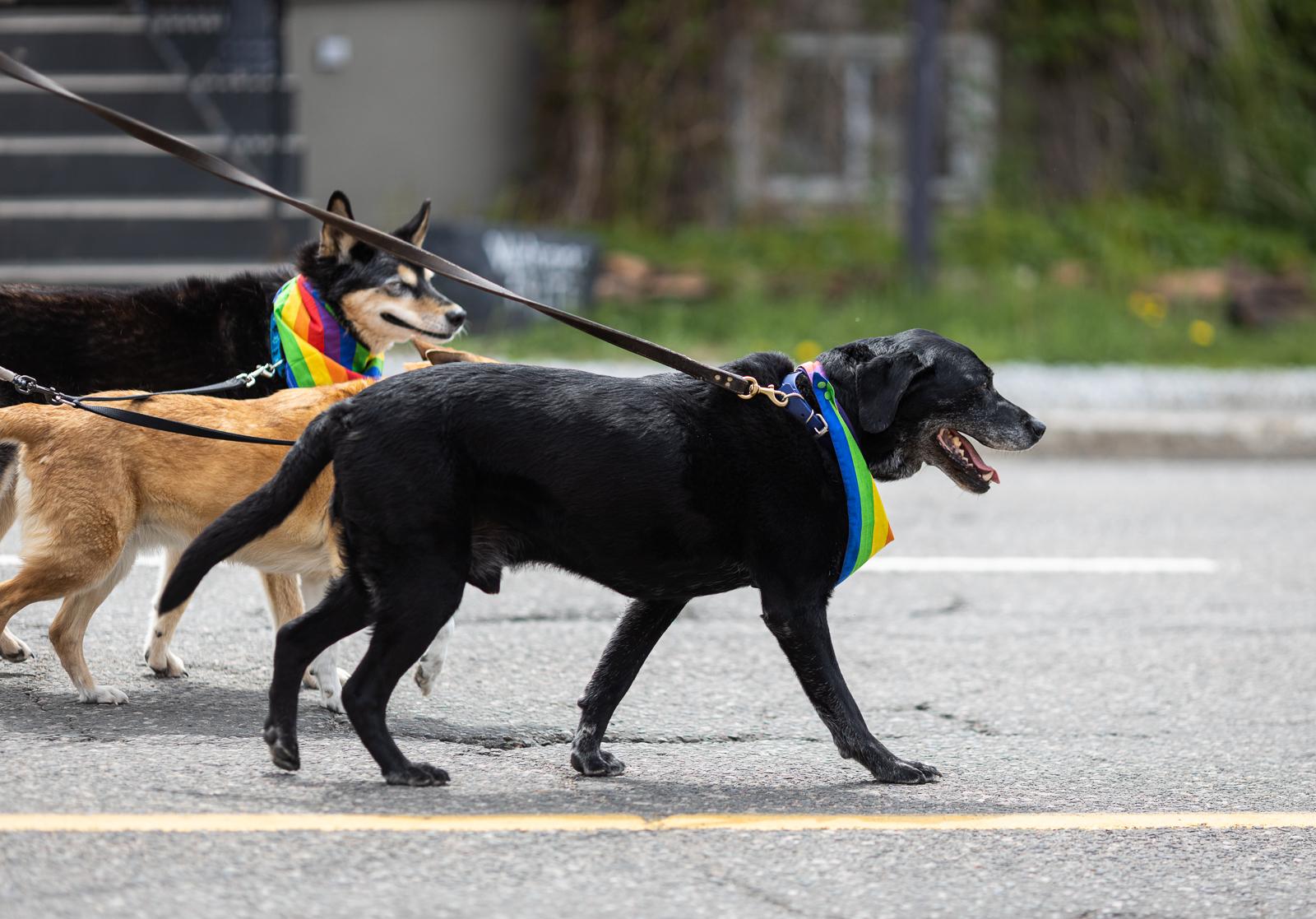 pride-parade-2019-fb-116.jpg