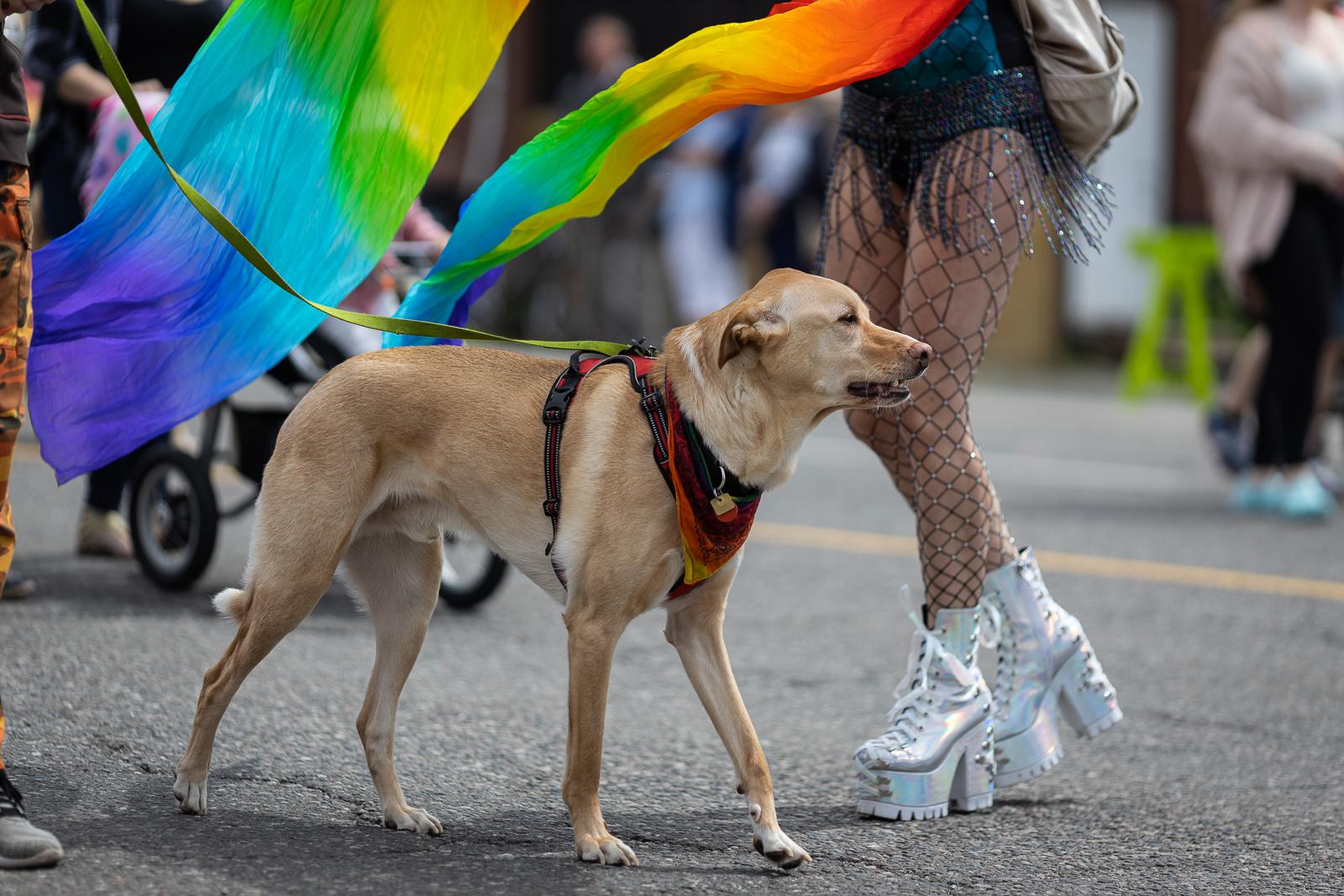 pride-parade-2019-fb-133.jpg