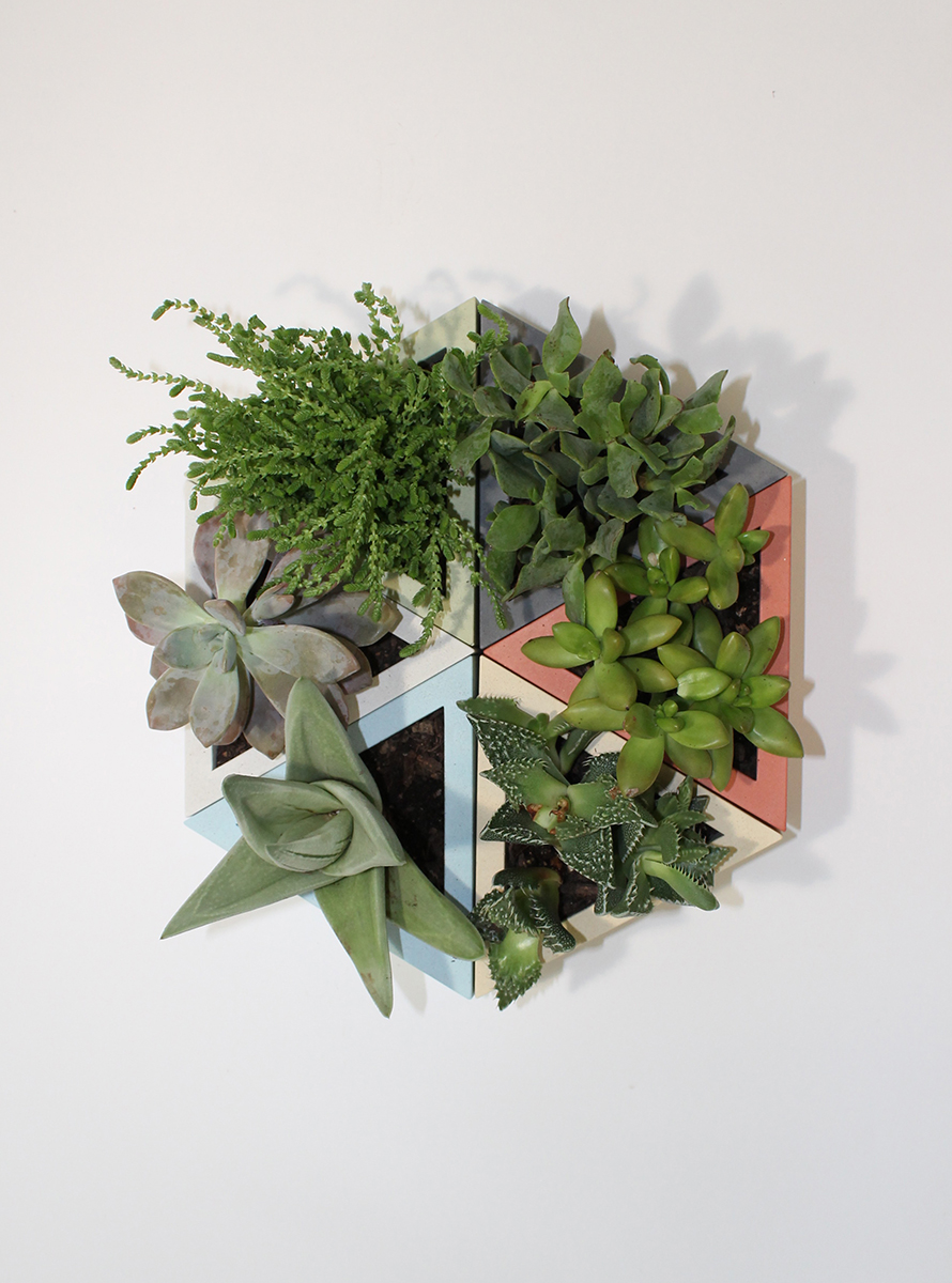 sixty group plants web.jpg