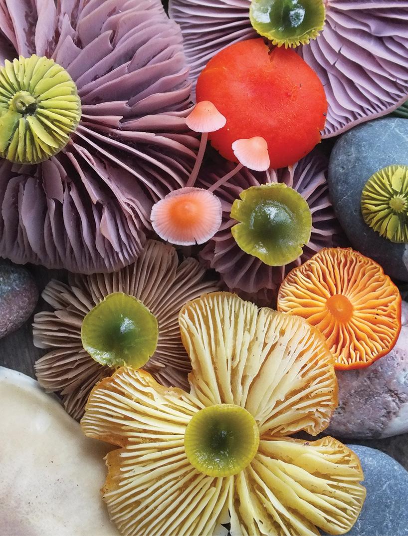 jill-bliss-mushrooms-designboom-07.jpg
