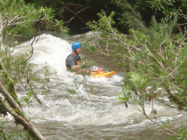 1-6-2008 williams river 057.JPG