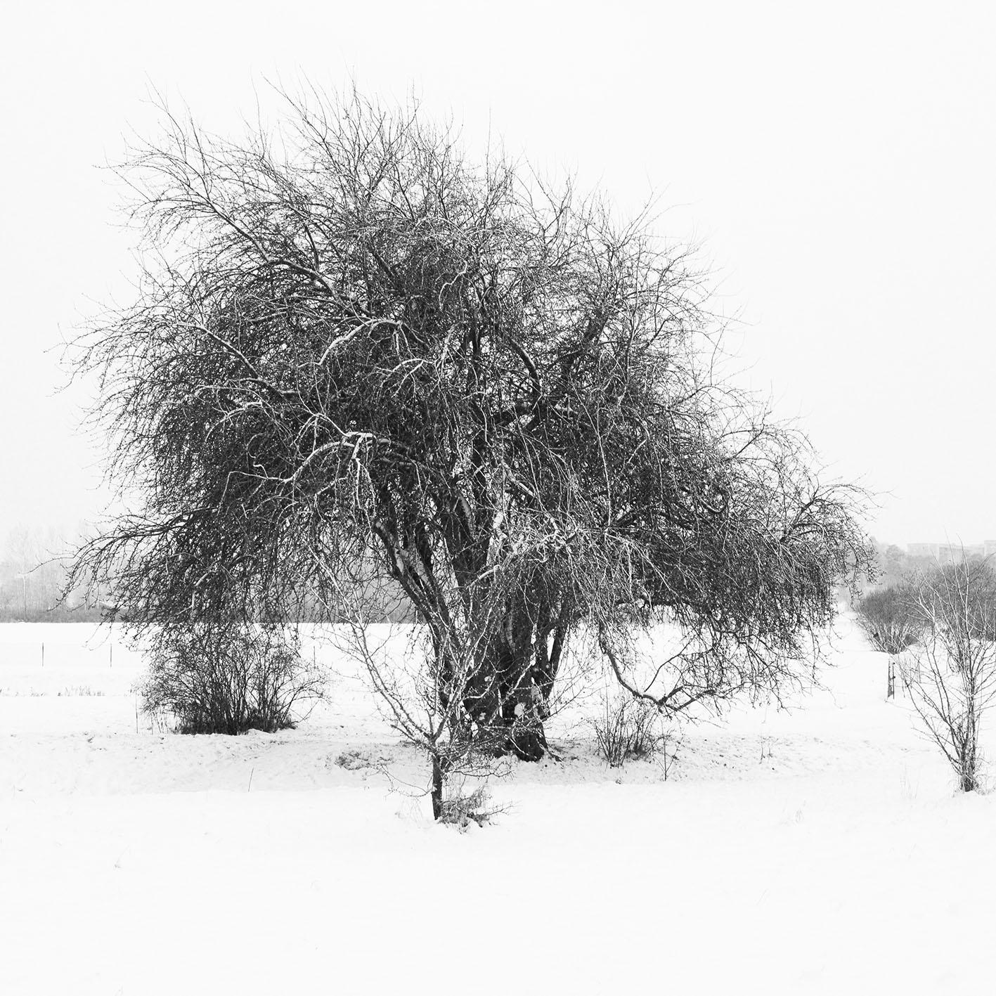2013-12-11 Portfolio-14.jpg