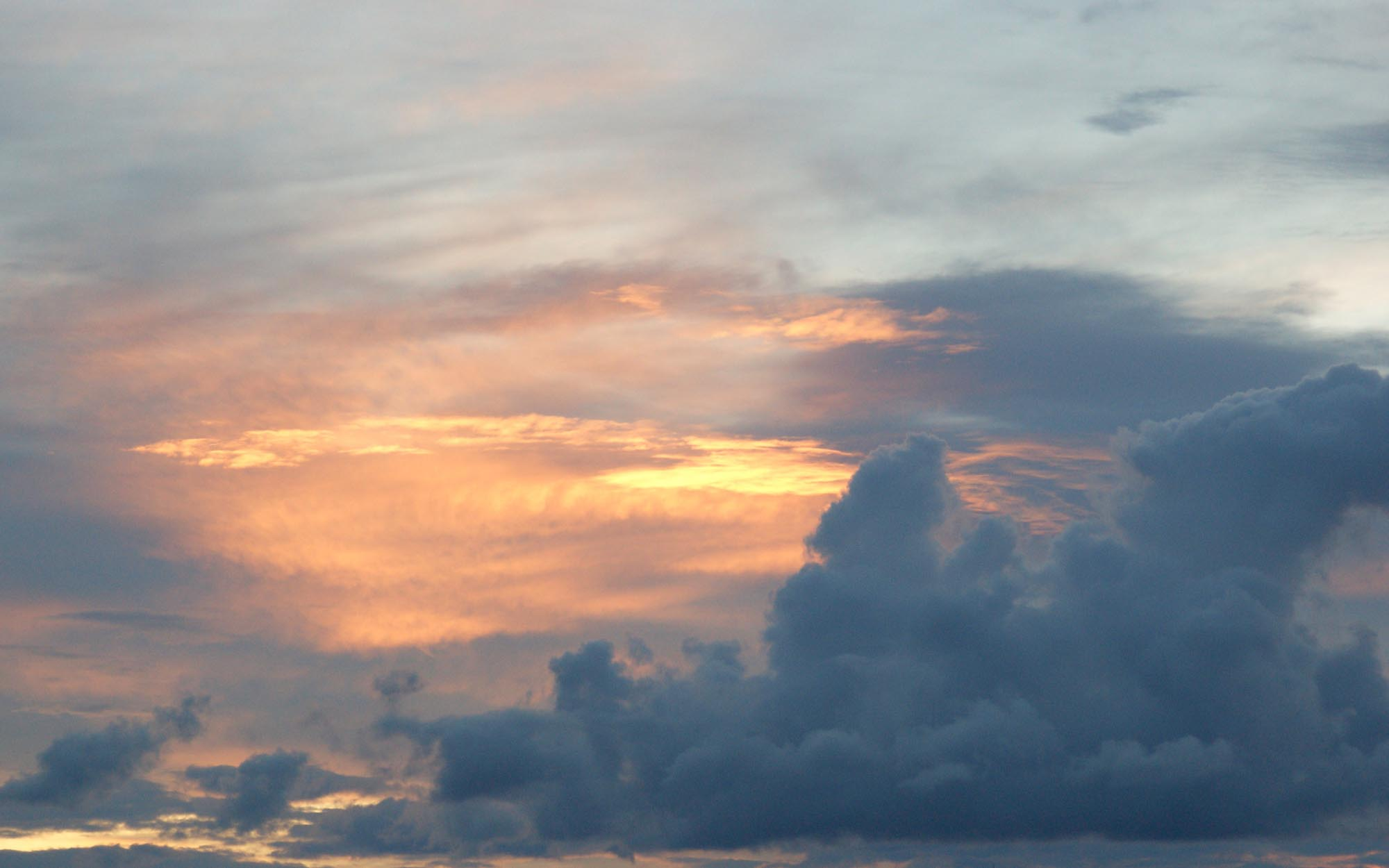 2013.08.17 16-2_60x_37_5_1.jpg