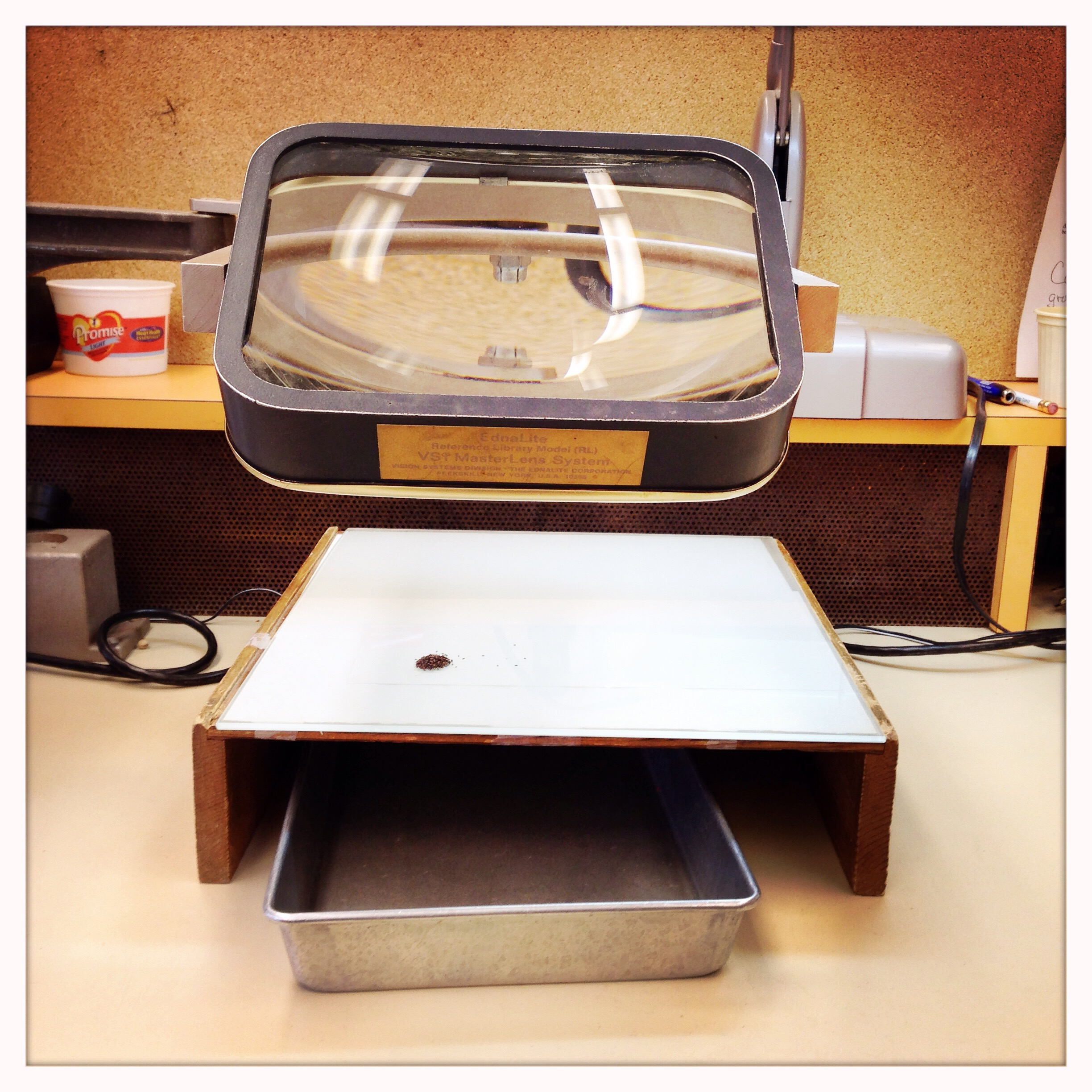 Magnifying glass station used for hand-sorting and seed counting.