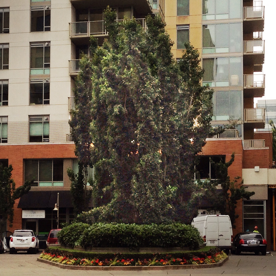 Tree planter at the center of the drive features a circular grove of tall, narrow habit trees. These trees are about 60 feet tall and 10 feet wide or less.