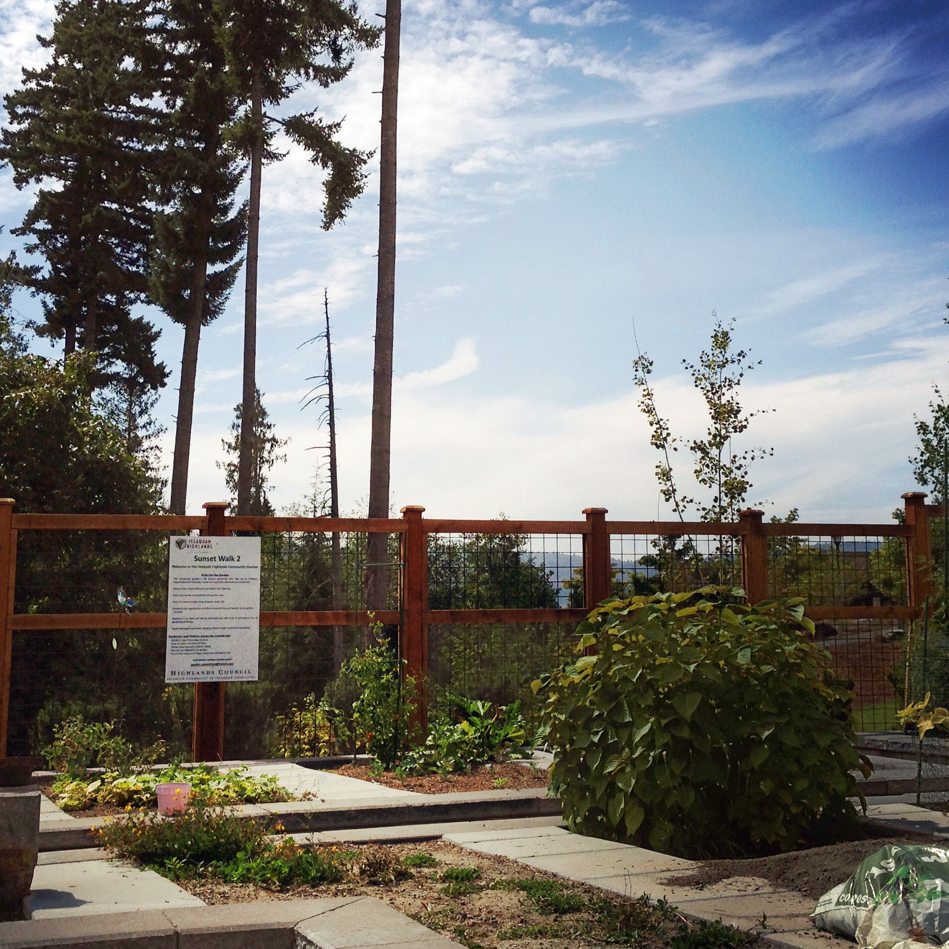The Sunset Walk Community Garden, where my P-Patch is located, has breathtaking views of Tiger Mountain in the distance.