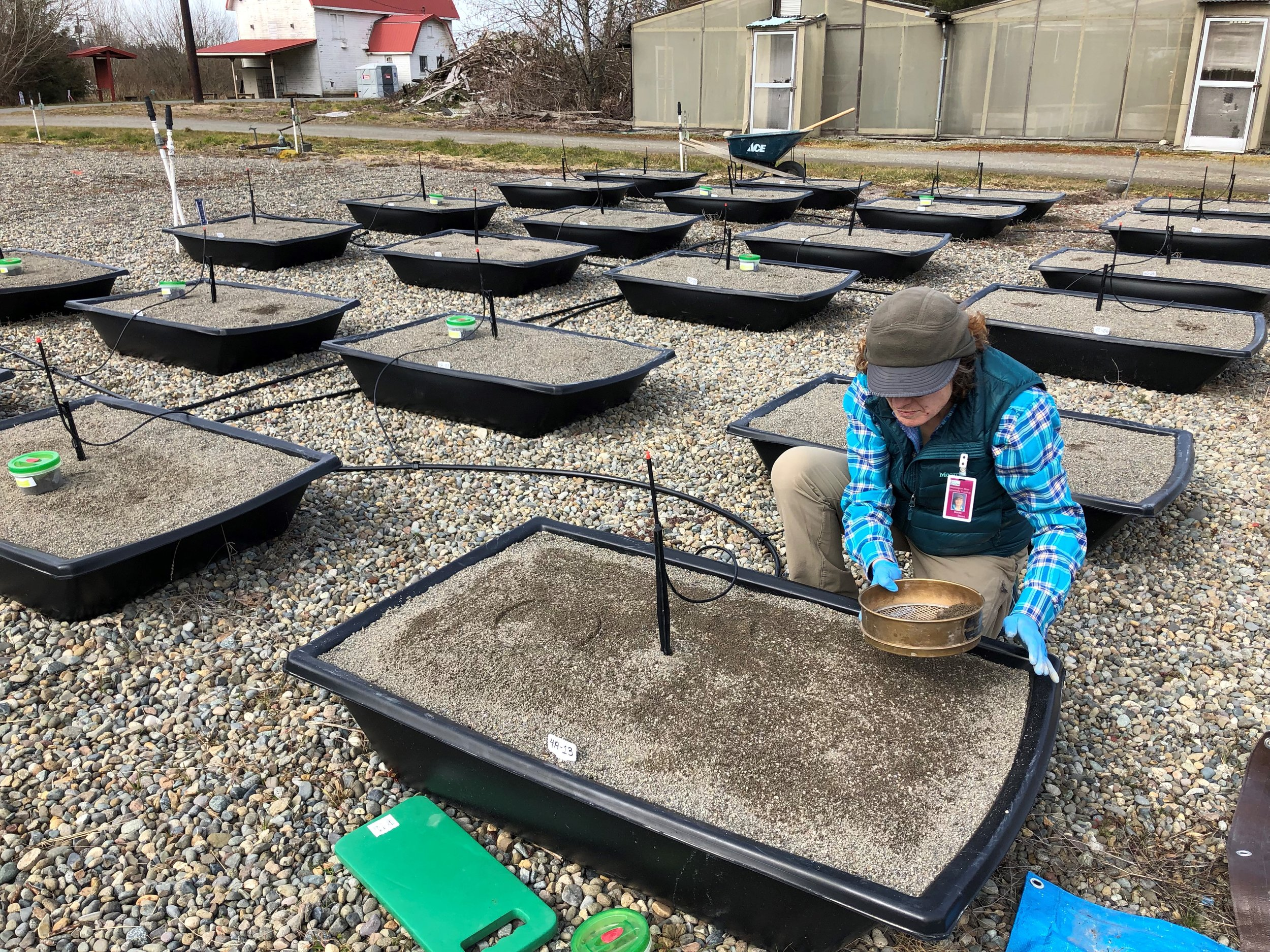Susan, carefully spreading the seed mix over the mesocosm container.