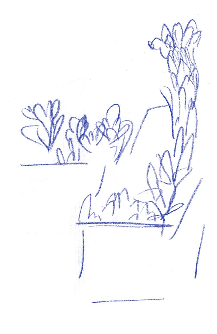 balcony greens