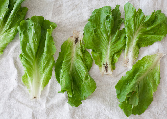 Dirty+lettuce.jpg
