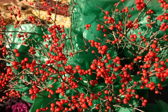 Fall+Berries.jpg