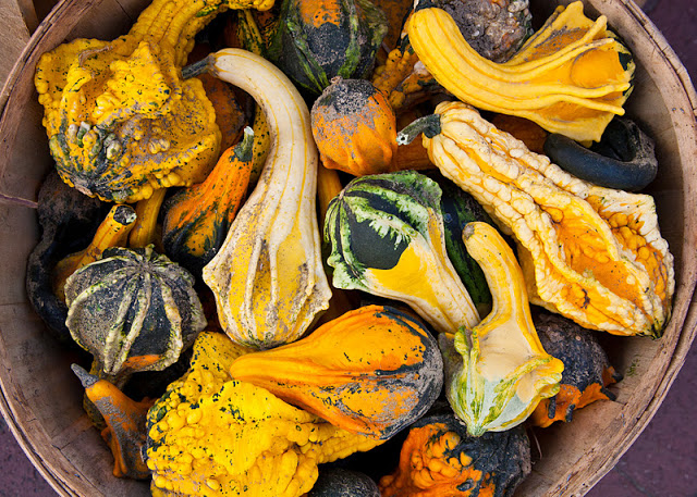 Gourds+in+basket-8933.jpg