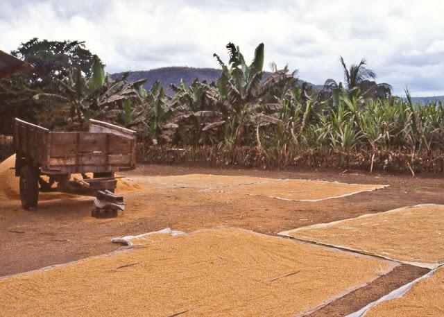 Millet+Tanzania+H.jpg