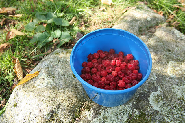 bucket+berries:rock.jpg