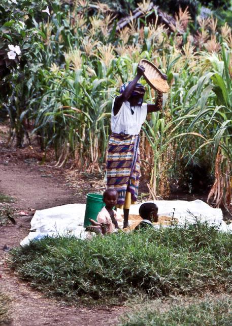 Millet+Tanzania.jpg