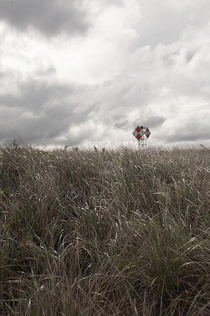 Crane+beach+grass+V-0044.jpg