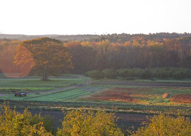 Hutchins+farm+field-0185.jpg