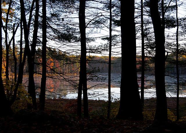 Pond+view-0216.jpg