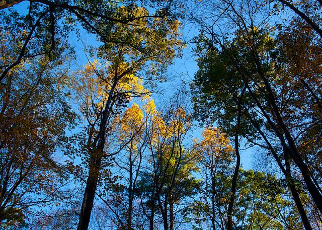 estabrook+trees-0223.jpg