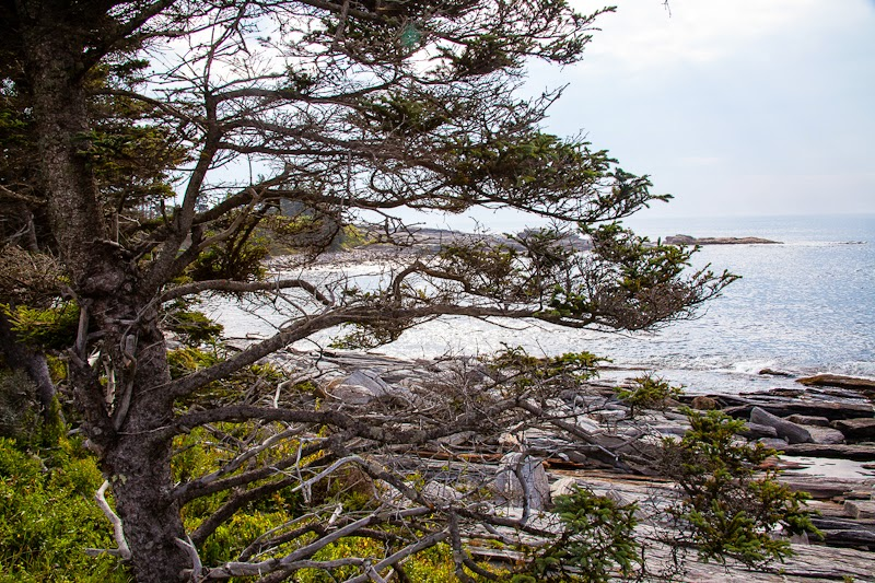 near+pemaquid+coastline.jpg