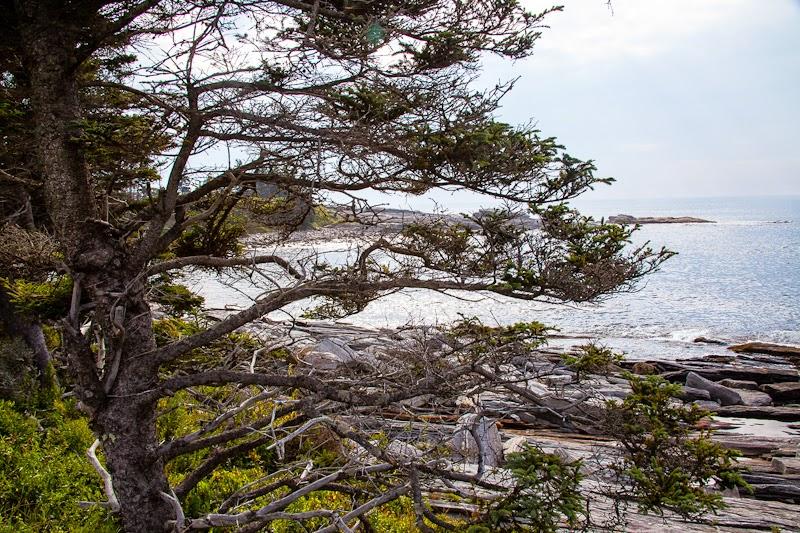 near+pemaquid+coastline.jpg