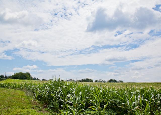 Corn+field+2.jpg