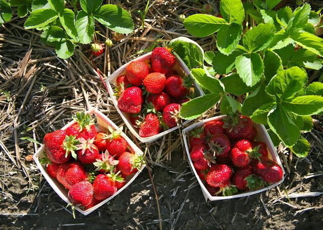 Strawberry+boxes.jpg