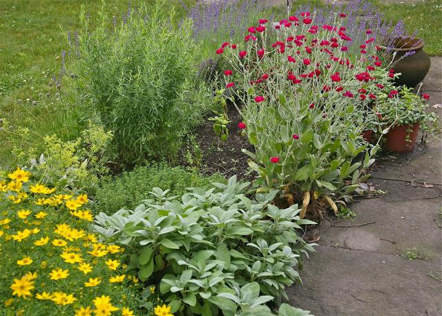 herb+garden.jpg