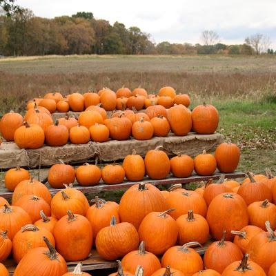 Pumpkin+1a.jpg
